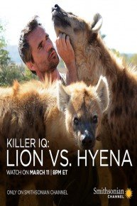 Killer IQ: Lion vs. Hyena