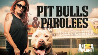 Pit Bulls and Parolees Season 3 Episode 2