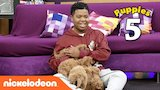 Watch Game Shakers - The Cute Puppy Challenge  w/ Benjamin Flores Jr. (AKA Luckiest Kid Ever) | Game Shakers | Nick Online