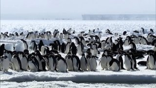 Watch Frozen Planet Season 1 Episode 8 - Autumn, Part 2 Online