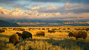 Watch America's National Parks Season 1 Episode 6 - Yellowstone Online