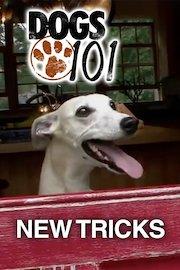 Dogs 101: New Tricks