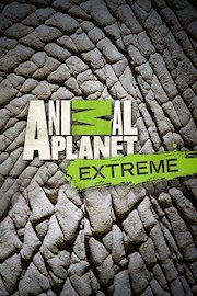 Animal Planet Investigates