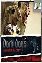 Dark Days in Monkey City