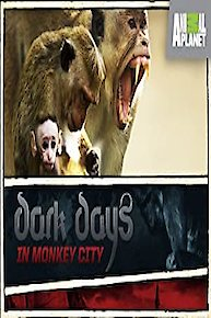 Dark Days in Monkey City