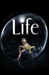 LIFE: Discovery Channel
