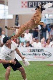 Purina Incredible Dog Challenge