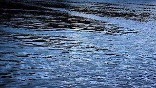 Watch River Monsters Season 8 Episode 2 - Death Down Under Online