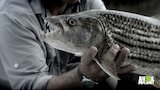 Watch River Monsters - Giant Sinister Fish in the Zambezi River Online