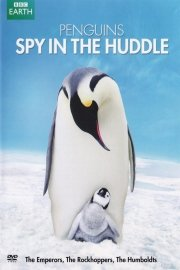 Penquins: Spy in the Huddle
