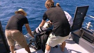Watch Shark Week Season 2015 Episode 11 - Sharksanity: The Ret... Online