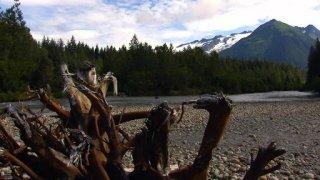 Watch Man, Woman, Wild Season 2 Episode 9 - Bear's Kitchen Online