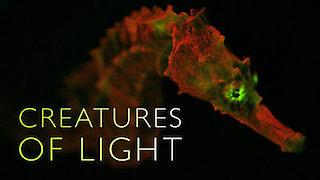 Watch NOVA Season 43 Episode 14 - Creatures of Light Online