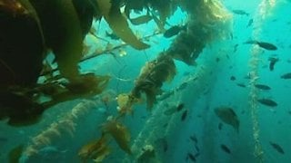 Watch The Blue Planet Season 1 Episode 5 - Seasonal Seas Online
