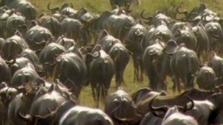 Watch Great Migrations Season 1 Episode 1 - Great Migrations Online