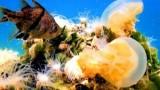 Watch Great Migrations Season  - Jellyfish in Danger Online