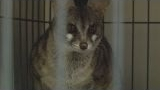 Watch Wild Justice Season  - Wild Justice - Exotic Animal Bust Online
