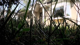 Watch Infested Season 2 Episode 6 - Under Siege Online