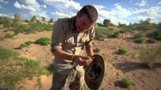 Watch Beast Hunter Season 1 Episode 5 - Mongolian Death Worm Online