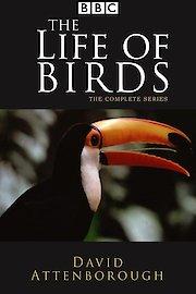 Life of Birds