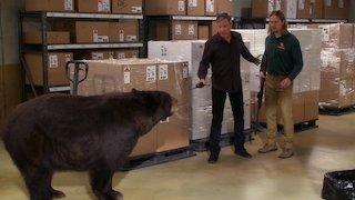 Watch Last Man Standing Season 6 Episode 1 - Papa Bear Online