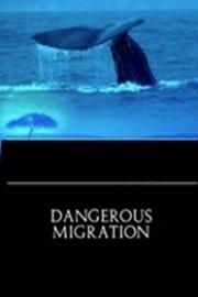 Dangerous Migration