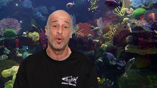 Watch Tanked Season 12 Episode 102 - Fish Out of Water Sp...Online