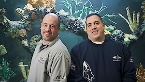 Watch Tanked Season 12 Episode 1 - More than a Sister Online