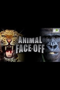 Animal Face-Off