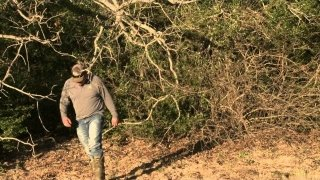 Watch Animal Planet Extreme Season 2 Episode 7 - Invasion of the Muta... Online