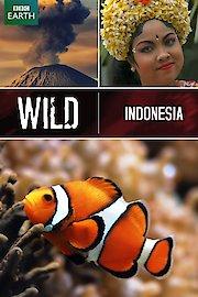 Wild Indonesia (BBC Earth)