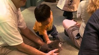 Watch The Little Couple Season 10 Episode 6 - A Little Trip To The...Online