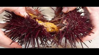 Watch Bizarre Foods Season 17 Episode 6 - The Pacific Coast Hi...Online