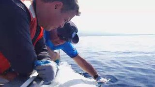 Watch Ocean Mysteries Season 4 Episode 15 - Eye of the Tiger Sha... Online