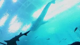 Watch Ocean Mysteries Season 4 Episode 16 - Sharks Online