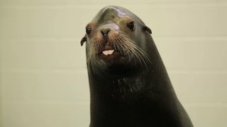 Watch Ocean Mysteries Season 5 Episode 18 - Pinnipeds at Georgia... Online