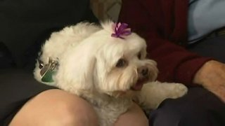 Watch Dog Whisperer Season 3 Episode 17 - Bodhi Maggie & Moll... Online