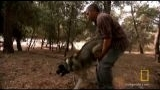Watch Dog Whisperer - Walking the Walk | National Geographic Online