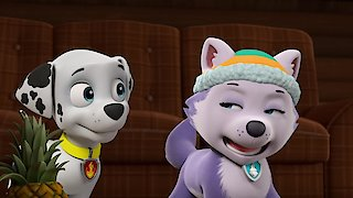 Watch Paw Patrol Season 8 Episode 3 - Pups Save a City Kit...Online