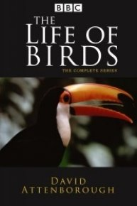David Attenborough: Life of Birds