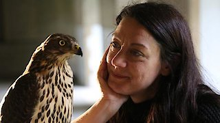 Watch Nature Season 36 Episode 4 - H is for Hawk: A New... Online