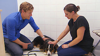 Dr. Chris Pet Vet Season 6 Episode 17