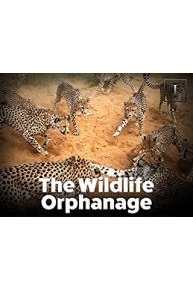 The Wildlife Orphanage
