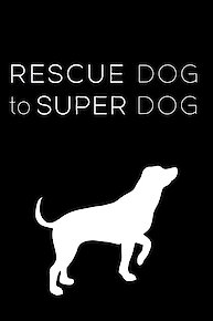 Rescue Dog to Super Dog