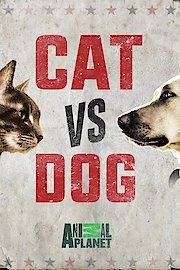 Cat vs. Dog