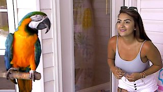 Watch Floribama Shore Season 1 Episode 4 - Home Sweet Home to M... Online