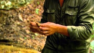 Watch Man Woman Wild Season 2 Episode 10 - Newts and Roots Online