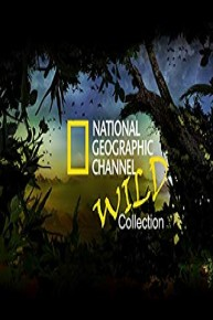 National Geographic Channel: Wild