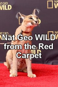 Nat Geo WILD from the Red Carpet