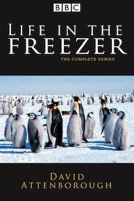 Life in the Freezer